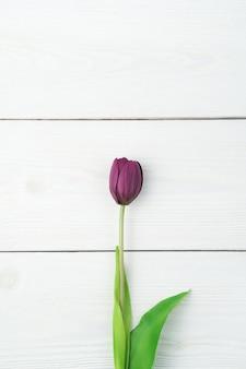 Eine lila tulpe auf einem hellen natürlichen hintergrund. draufsicht mit platz zum kopieren.