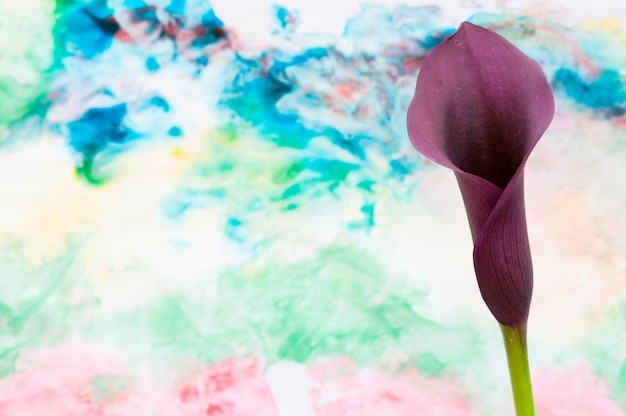 Eine lilie mit einem künstlerischen hintergrund
