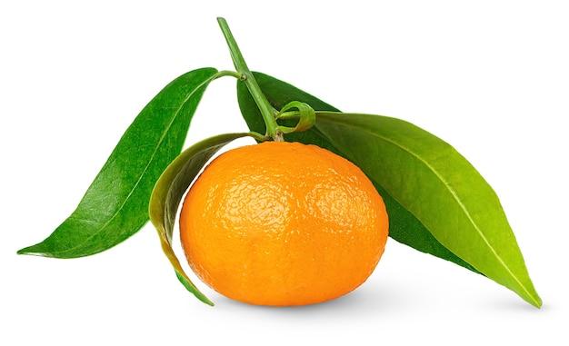 Eine mandarine mit stiel und blättern isoliert auf weißem raum
