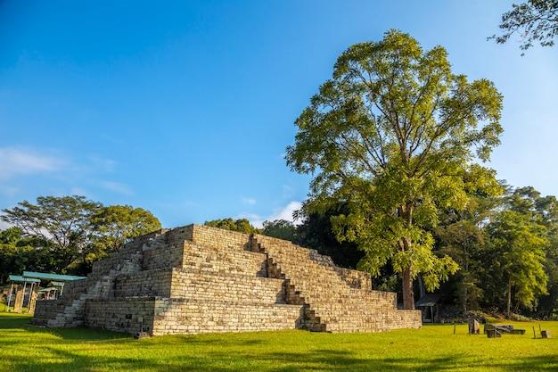 Eine maya-pyramide neben einem baum in den tempeln von copan ruinas