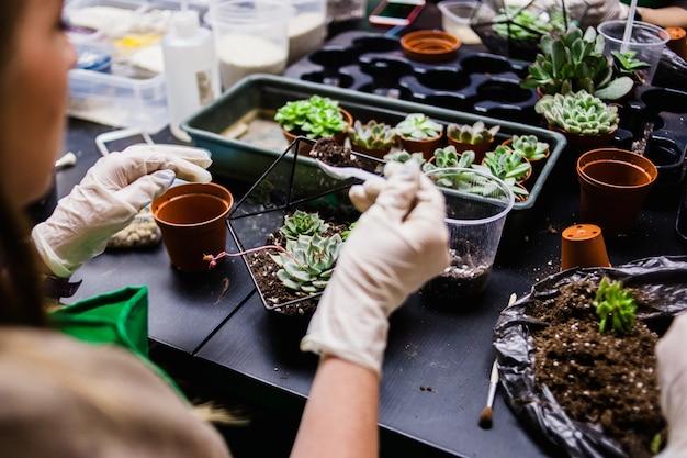 Eine meisterklasse für das pflanzen von kakteen und sukkulentov in form von glas