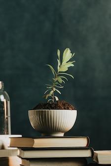 Eine minimalistische aufnahme einer pflanze, die in einem topf mit wasser und büchern wächst, konzept entspannen mit kopierraum