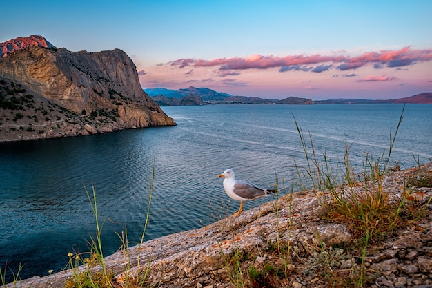 Eine möwe bei sonnenuntergang am kap kaptschik auf der krim schöne meereslandschaft