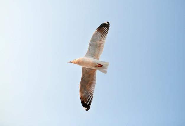 Eine möwe fliegt in den himmel