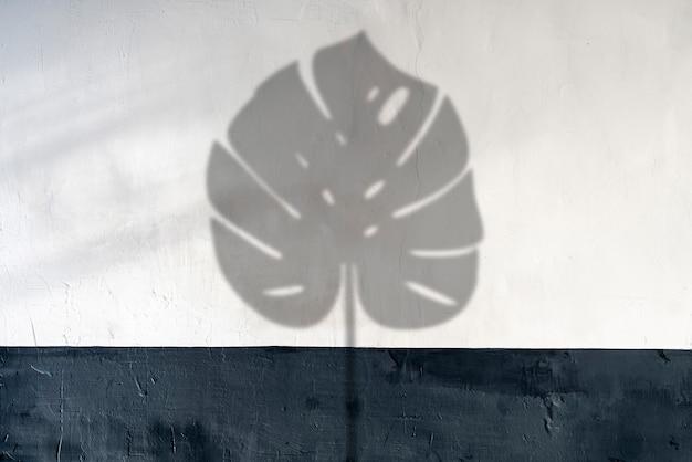 Eine monstera-pflanze hinterlässt schatten auf dem wandhintergrund, minimales tropendekorationskonzept