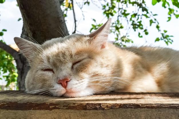 Eine müde dorfkatze schläft an einem heißen tag im schatten eines apfelbaums
