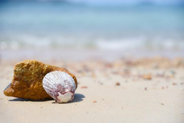 Eine muschel am strand mit unscharfem blauem seehintergrund. sommertagskonzept