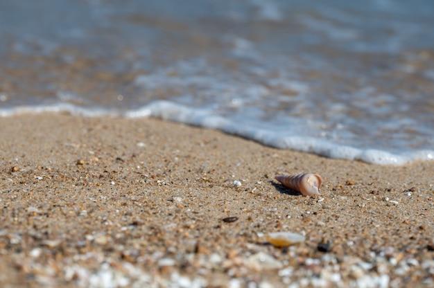 Eine muschel war am strand