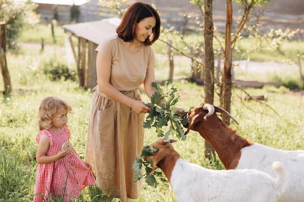 Eine mutter und ihre schöne und lockige tochter weiden ziegen auf einer öko-farm