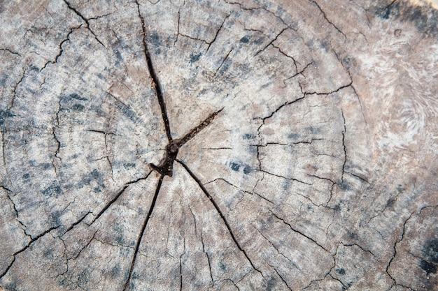 Eine nahaufnahme der oberfläche des alten schnittes des baums, beschaffenheit eines alten baums, holz, tabelle, stumpf, hintergründe