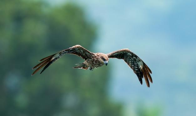 Eine nahaufnahme eines adlers, der in den himmel mit einem unscharfen hintergrund fliegt