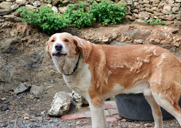 Eine nahaufnahme eines niedlichen golden retriever-hundes