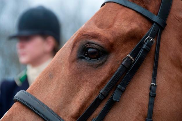 Eine nahaufnahme eines pferdes mit einem reiter