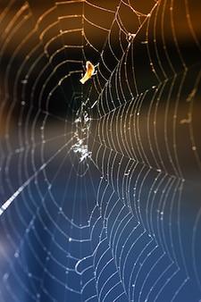 Eine nahaufnahme eines spinnennetzes