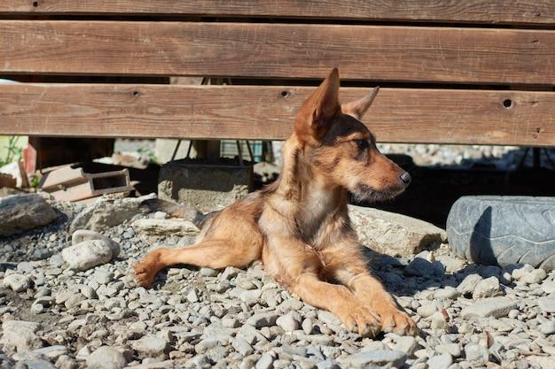 Eine nahaufnahme eines streunenden hundes, der auf einem kiesboden liegt