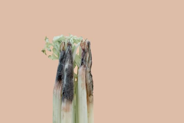 Eine nahaufnahme eines ungesunden faulen verdorbenen selleries auf hellem hintergrund. schimmeliger sellerie.