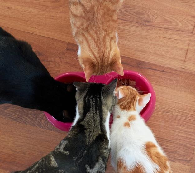 Eine nahaufnahmeaufnahme der katze, die von der platte drinnen frisst