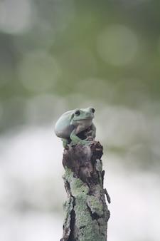 Eine nette grüne kröte über einem baumstamm mit einem bokeh-hintergrund