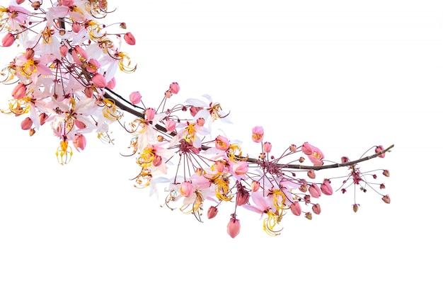 Eine niederlassung des rosa duschbaums