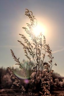 Eine niederlassung von trockenem gras im sonnenuntergang