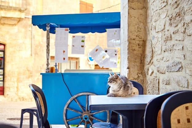 Eine niedliche katze, die auf einem weißen tisch liegt. fast-food-wagen