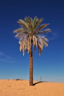 Eine oase in der sahara in afrika