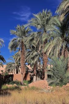 Eine oase in der wüste sahara im herzen afrikas
