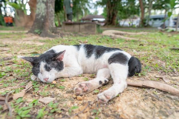 Eine obdachlose katze, die auf der seite liegt.