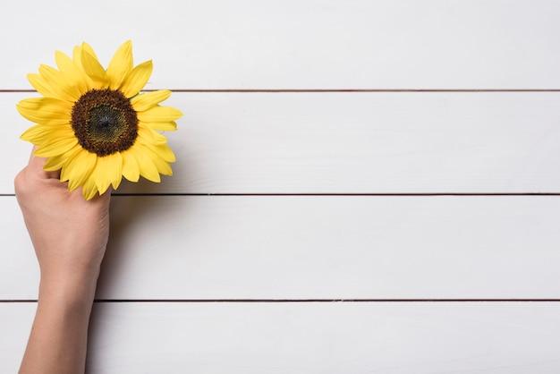 Eine obenliegende ansicht der hand gelbe sonnenblume über hölzernem hintergrund halten