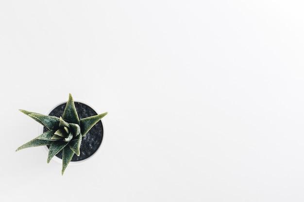 Eine obenliegende ansicht der kaktustopfpflanze auf weißem hintergrund