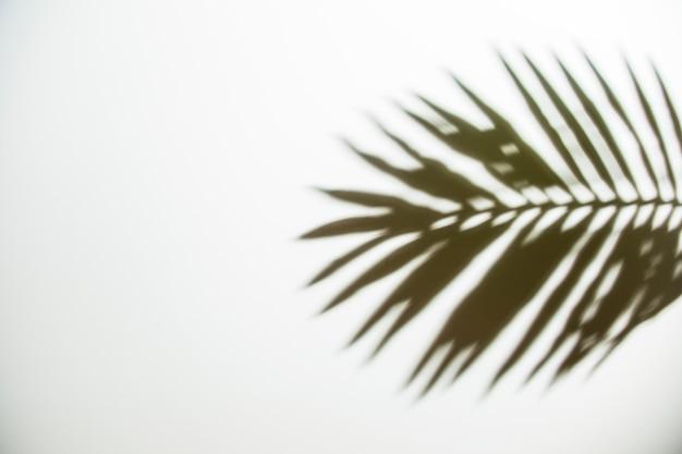 Eine obenliegende ansicht des schwarzen schattens auf weißem hintergrund