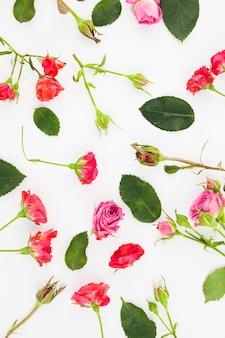Eine obenliegende ansicht von roten und rosa rosen auf weißem hintergrund