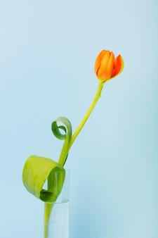 Eine orange tulpen im becherglas gegen blauen hintergrund