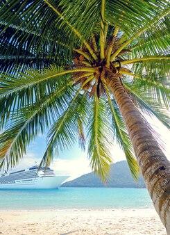Eine palme an einem strand