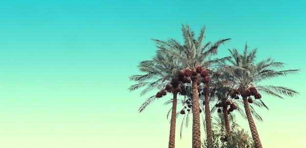 Eine palme vor dem hintergrund eines blauen himmels