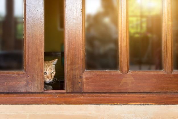 Eine pelzige getigerte katze schaut hinter der tür hervor, eine katze schaut hinter einer holztür hervor