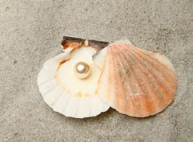 Eine perle in der muschel