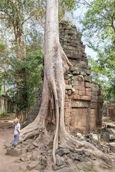 Eine person, die berühmten dschungelbaum ta prohm betrachtet, wurzelt die umfassung von angkor-tempeln, rache der natur gegen menschliche gebäude, reiseziel kambodscha.