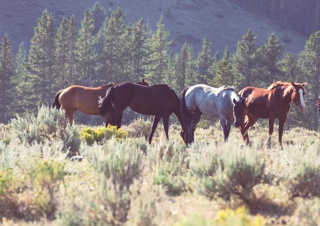 Eine pferdeherde auf einer herbstwiese