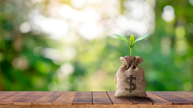Eine pflanze, die in einer tasche wächst, die an einem holztisch und der morgensonne hängt.