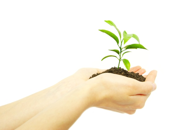 Eine pflanze zwischen den händen auf weiß halten