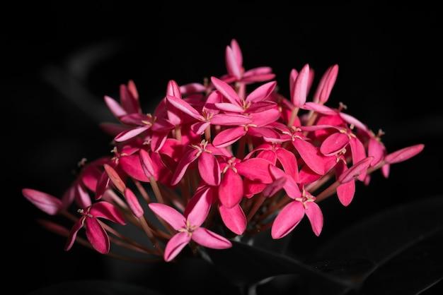 Eine rosa ixora-blume