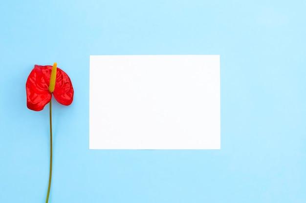Eine rote blume als anthurium und leeres leeres papier