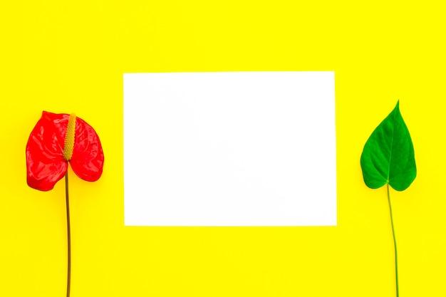Eine rote blume und blatt und leeres papier