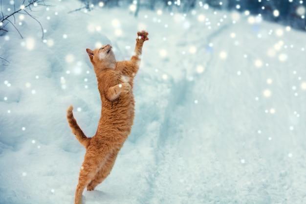 Eine rote katze fängt während eines schneefalls schneeflocken