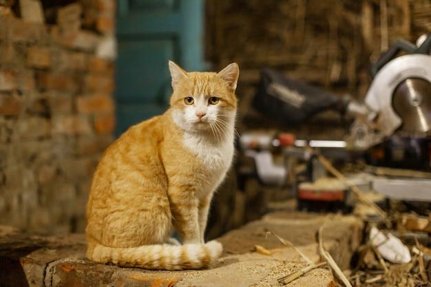 Eine rote katze sitzt und sonnt sich auf einem steinofen. tierleben im dorf