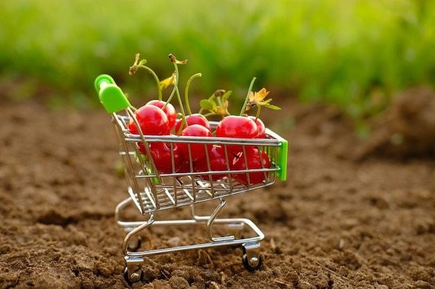 Eine rote reife kirsche in einem wagen mit kirschen ein karren mit kirschen steht auf dem boden gegen a