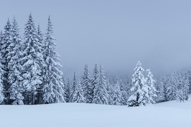 Eine ruhige winterszene. mit schnee bedeckte tannen stehen im nebel. schöne landschaft am rande des waldes. frohes neues jahr