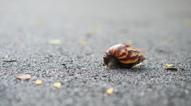 Eine schnecke, die mit weichem fokus auf dem asphaltboden läuft.
