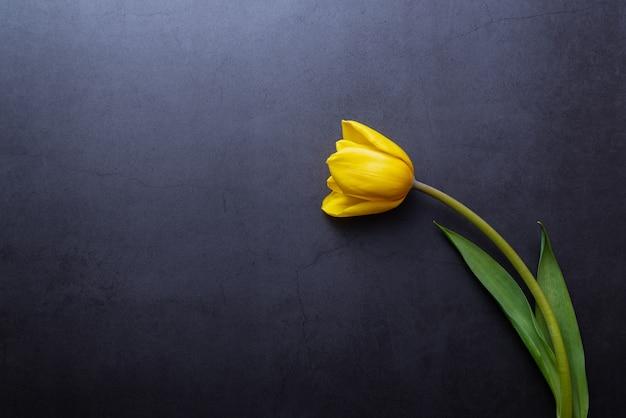Eine schöne gelbe tulpe in nahaufnahme gegen eine dunkelblau-graue wand.